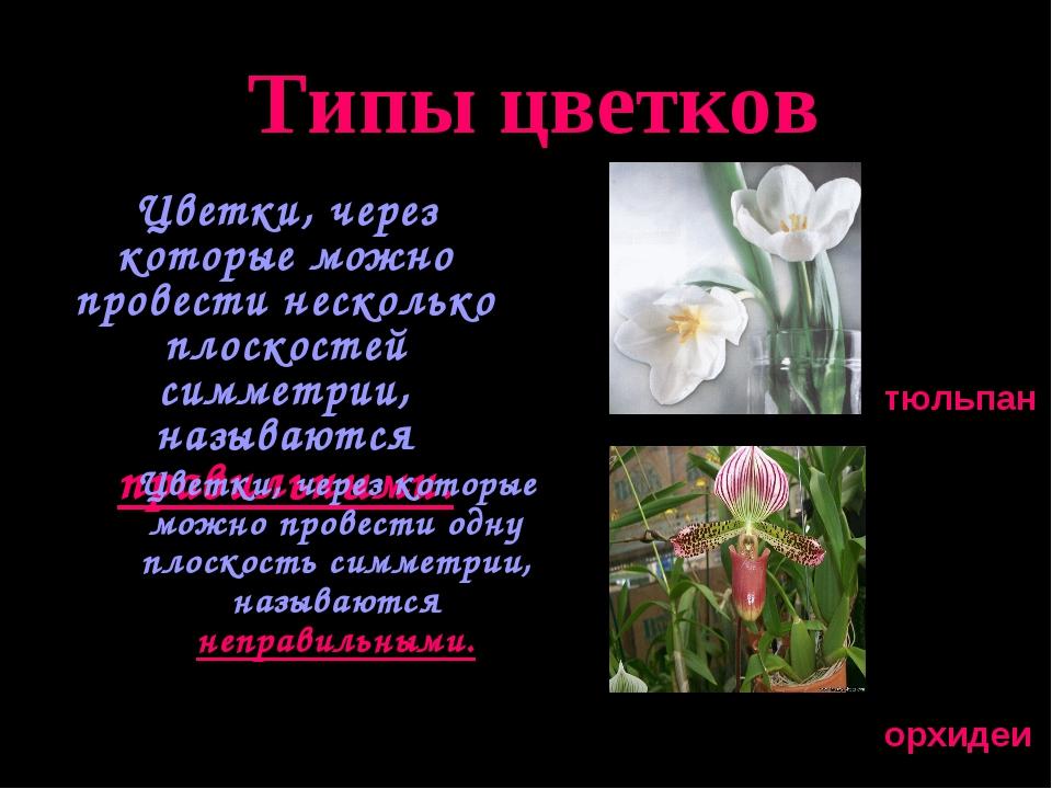 Типы цветков Цветки, через которые можно провести несколько плоскостей симме...
