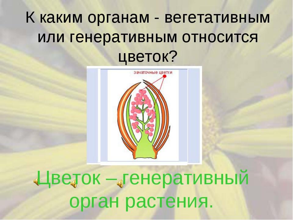 К каким органам - вегетативным или генеративным относится цветок? Цветок – ге...