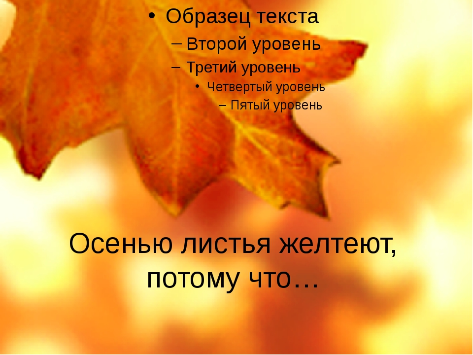 Осенью листья желтеют, потому что…
