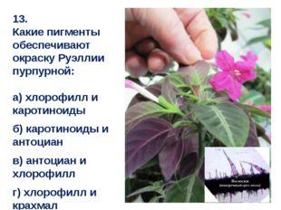 13. Какие пигменты обеспечивают окраску Руэллии пурпурной: а) хлорофилл и кар