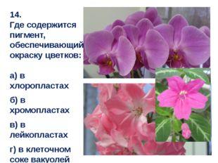 14. Где содержится пигмент, обеспечивающий окраску цветков: а) в хлоропластах