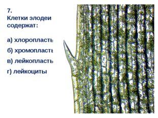 7. Клетки элодеи содержат: а) хлоропласты б) хромопласты в) лейкопласты г) ле