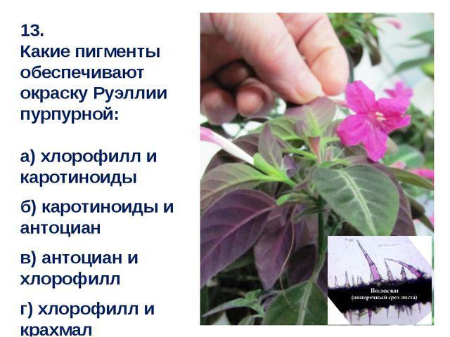 13. Какие пигменты обеспечивают окраску Руэллии пурпурной: а) хлорофилл и кар...