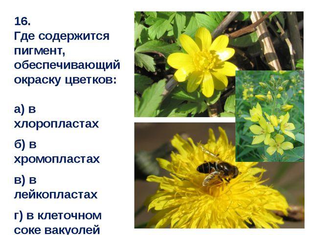 16. Где содержится пигмент, обеспечивающий окраску цветков: а) в хлоропластах...