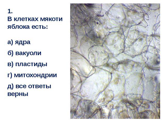 1. В клетках мякоти яблока есть: а) ядра б) вакуоли в) пластиды г) митохондри...