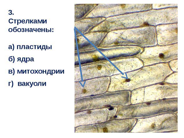 3. Стрелками обозначены: а) пластиды б) ядра в) митохондрии г) вакуоли