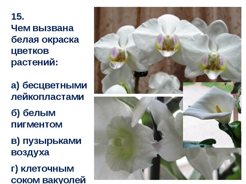 15. Чем вызвана белая окраска цветков растений: а) бесцветными лейкопластами...
