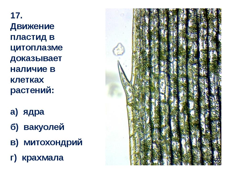 17. Движение пластид в цитоплазме доказывает наличие в клетках растений: а) я...