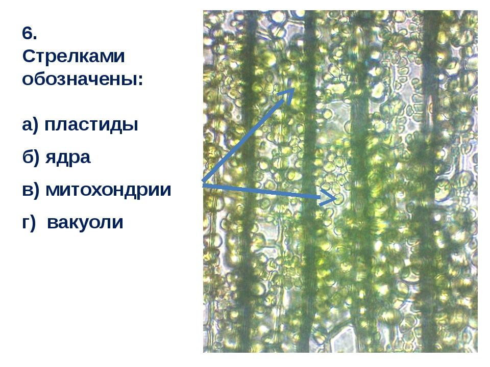 6. Стрелками обозначены: а) пластиды б) ядра в) митохондрии г) вакуоли