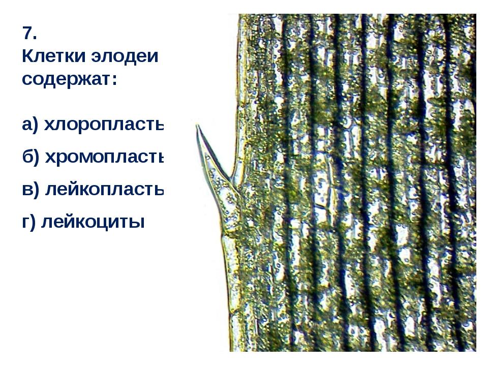 7. Клетки элодеи содержат: а) хлоропласты б) хромопласты в) лейкопласты г) ле...