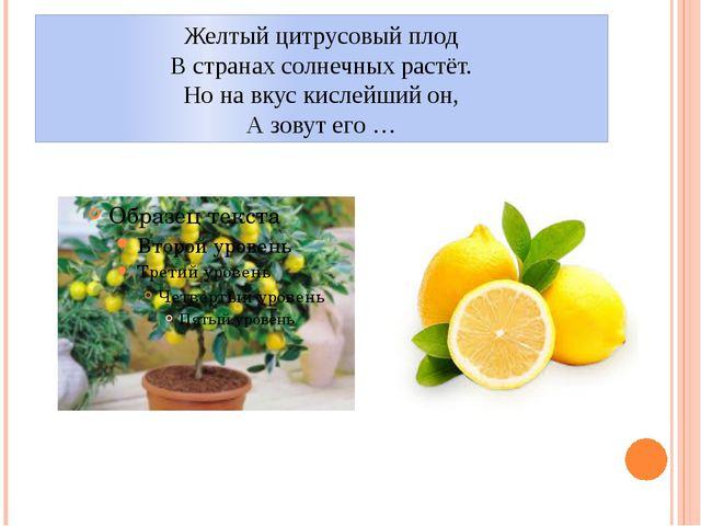 Желтый цитрусовый плод В странах солнечных растёт. Но на вкус кислейший он, А...