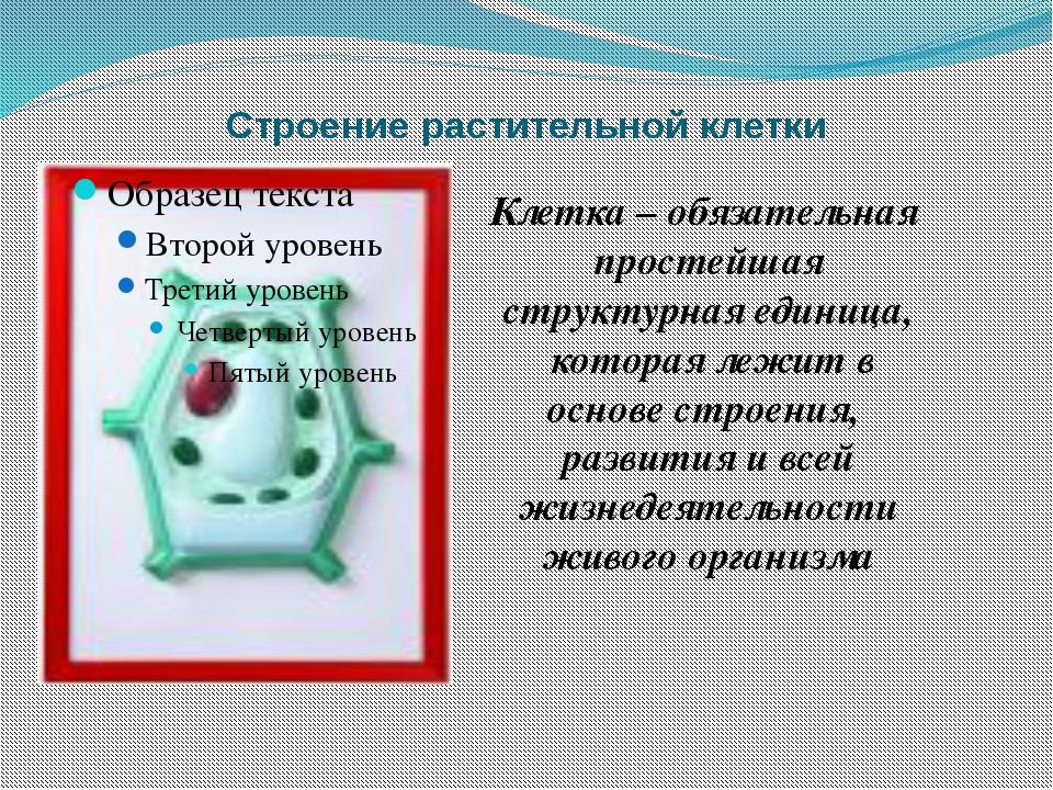 Строение растительной клетки Клетка – обязательная простейшая структурная еди...