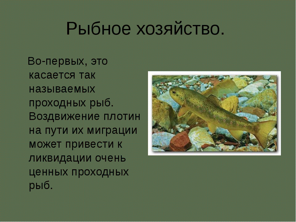 Рыбное хозяйство. Во-первых, это касается так называемых проходных рыб. Воздв...