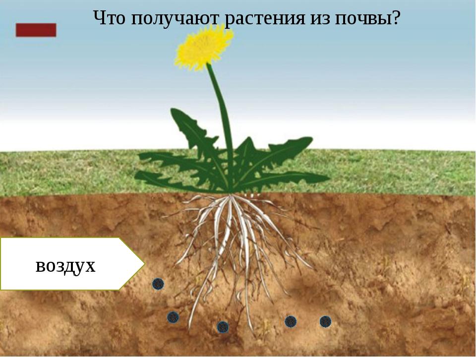 воздух Что получают растения из почвы?