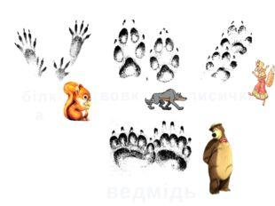 білка вовк лисичка ведмідь