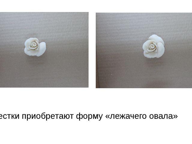 Лепестки приобретают форму «лежачего овала»