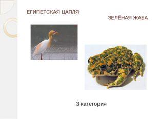 ЕГИПЕТСКАЯ ЦАПЛЯ ЗЕЛЁНАЯ ЖАБА 3 категория - На белых — сведения о редких видах.