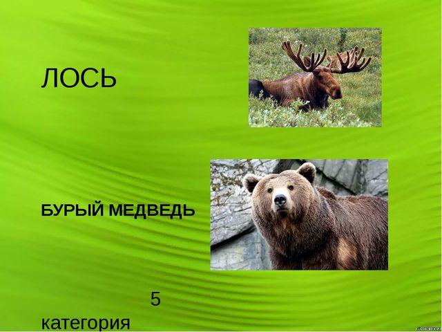 ЛОСЬ БУРЫЙ МЕДВЕДЬ 5 категория На зелёных страницах те животные, которых уда...