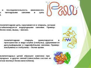 ПЕРВИЧНАЯ СТРУКТУРА: количество и последовательность аминокислот, соединенных