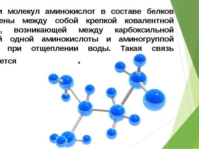 Остатки молекул аминокислот в составе белков соединены между собой крепкой ко...