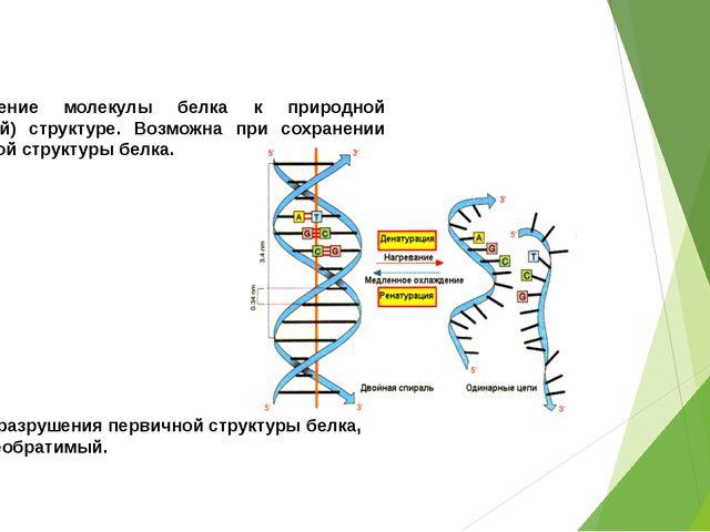 РЕНАТУРАЦИЯ: возвращение молекулы белка к природной (нативной) структуре. Воз...