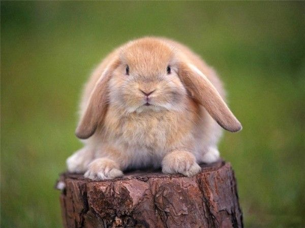 10 интересных фактов о зайцах