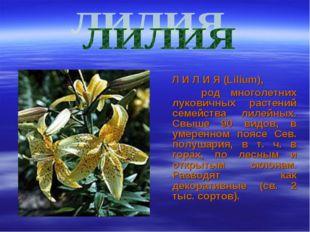 Л И Л И Я (Lilium), род многолетних луковичных растений семейства лилейных.