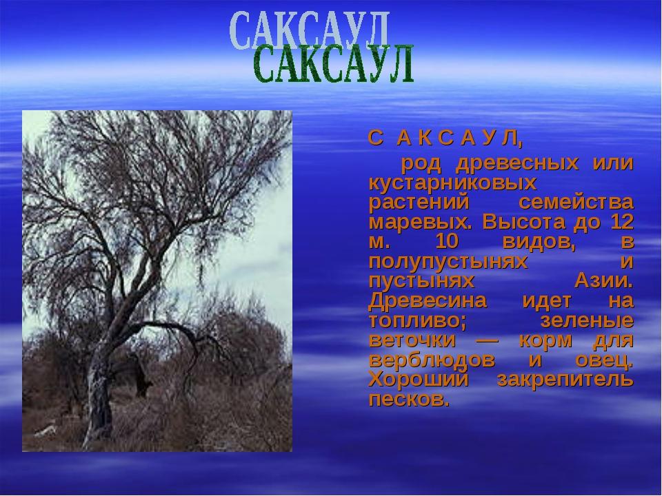 С А К С А У Л, род древесных или кустарниковых растений семейства маревых. В...