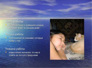 Цель работы: Узнать больше о домашних кошках, которые живут в каждом доме Зад