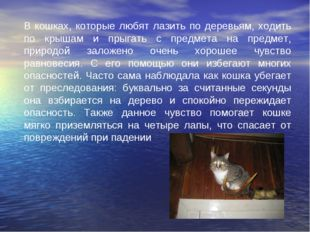 В кошках, которые любят лазить по деревьям, ходить по крышам и прыгать с п