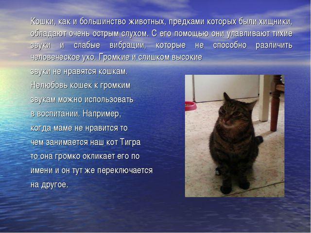 Кошки, как и большинство животных, предками которых были хищники, обладают о...
