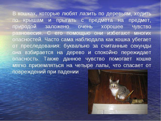 В кошках, которые любят лазить по деревьям, ходить по крышам и прыгать с п...