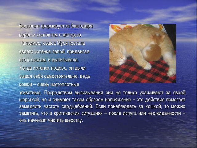 Осязание формируется благодаря первым контактам с матерью. Например, кошка...