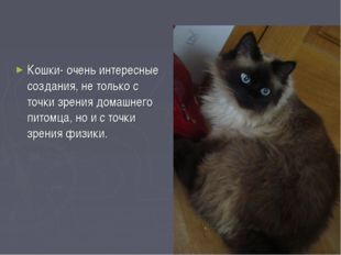 Кошки- очень интересные создания, не только с точки зрения домашнего питомца,