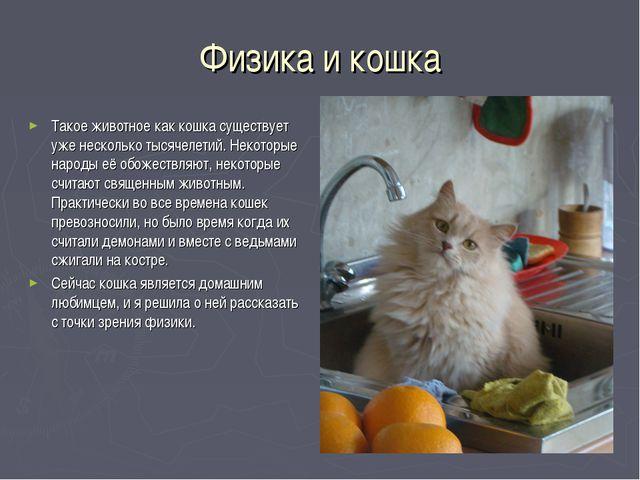 Физика и кошка Такое животное как кошка существует уже несколько тысячелетий....