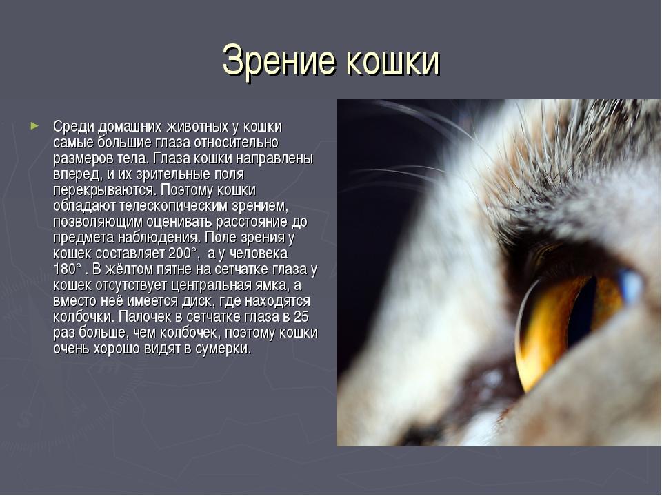 Зрение кошки Среди домашних животных у кошки самые большие глаза относительно...
