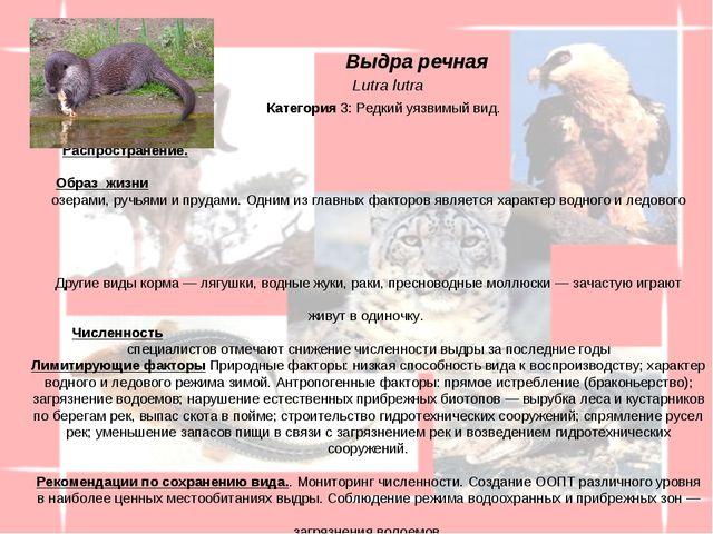 Распространение. Выдра обитает во всех районах обл. (за исключением Погарск...