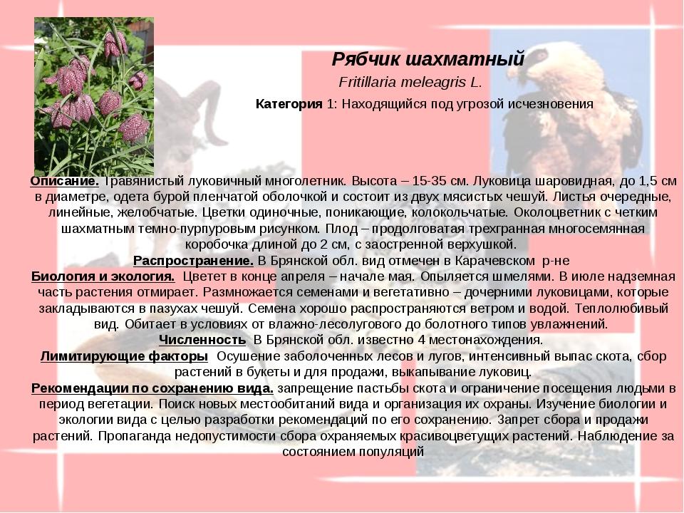 Описание. Травянистый луковичный многолетник. Высота – 15-35 см. Луковица ша...