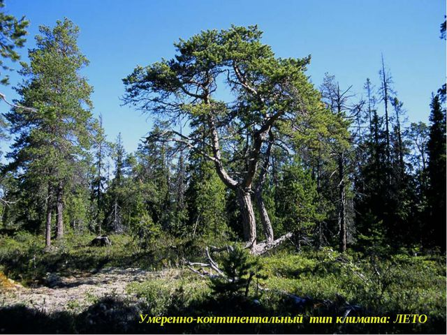 Умеренно-континентальный тип климата: ЛЕТО Умеренно-континентальный тип клима...