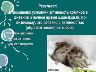 Результат: В домашних условиях активность хомяков в дневное и ночное время од
