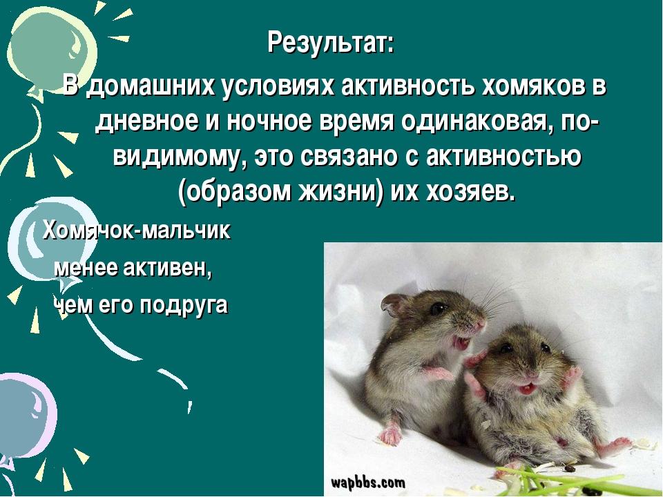 Результат: В домашних условиях активность хомяков в дневное и ночное время од...