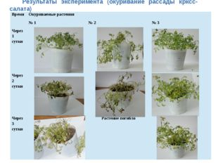 Результаты эксперимента (окуривание рассады крксс-салата) Время Окуриваемые р