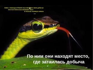 Змеи с помощью ЯЗЫКА выслеживаю свою добычу: они постоянно высовывают язык в