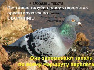 Почтовые голуби в своих перелётах ориентируются по ОБОНЯНИЮ Они запоминают за
