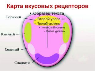 Карта вкусовых рецепторов