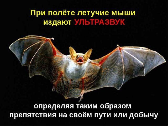 При полёте летучие мыши издают УЛЬТРАЗВУК определяя таким образом препятствия...