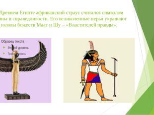 В Древнем Египте африканский страус считался символом истины и справедливости
