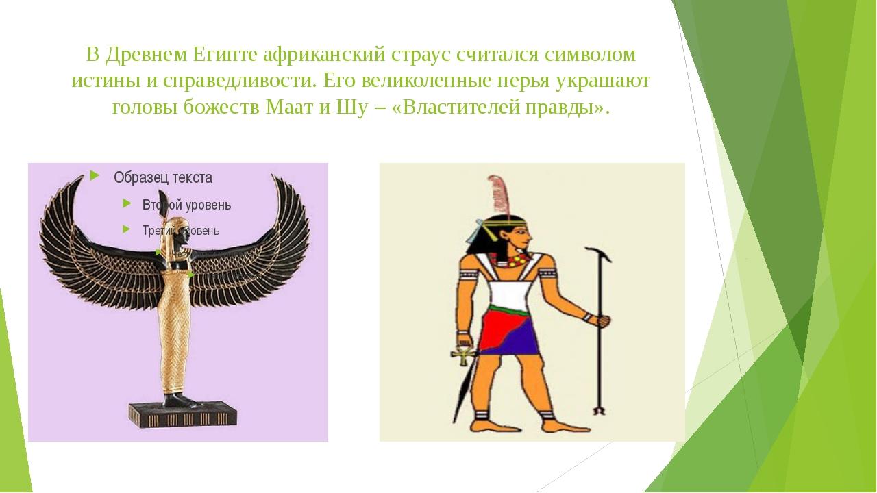 В Древнем Египте африканский страус считался символом истины и справедливости...