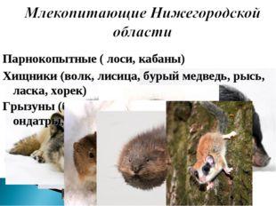 Парнокопытные ( лоси, кабаны) Хищники (волк, лисица, бурый медведь, рысь, лас