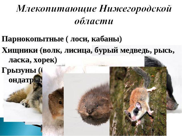 Парнокопытные ( лоси, кабаны) Хищники (волк, лисица, бурый медведь, рысь, лас...
